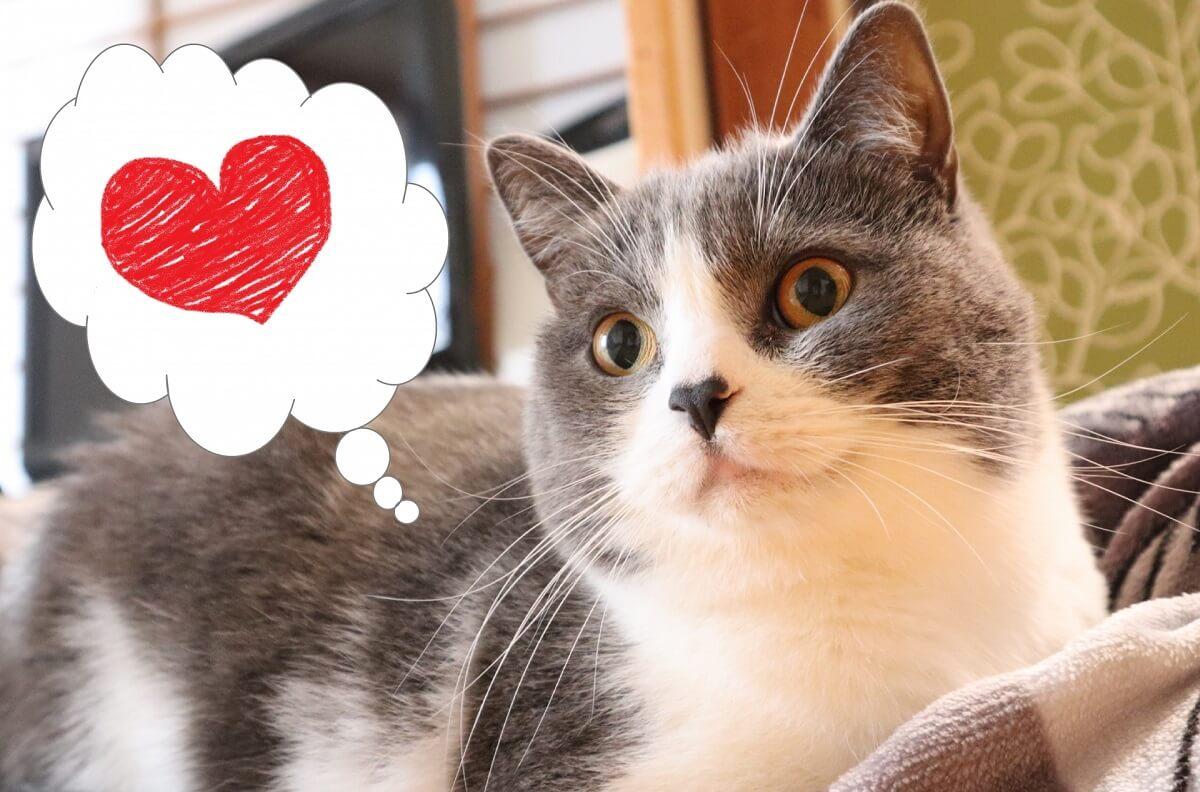 猫とハートマーク