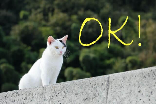 猫と「OK」の文字